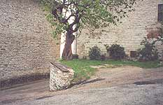 Gubbio. The place of the fight between Romeo and Tybalt . The fig tree shown in the film
